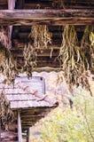 Groupes accrochants d'herbes médicinales Herbes et fleurs sèches dans le village images libres de droits