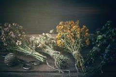 Groupes d'herbes curatives sur le conseil en bois Le perforatum de fines herbes de Medicine photographie stock