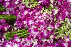 Groupes d'orchidées Photographie stock libre de droits