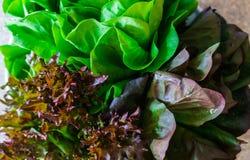 Groupes de couleur différente et différent frais en salade de forme photographie stock