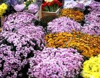 Groupes de fleurs Photos stock