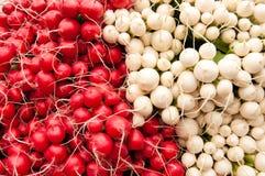 Groupes de radis rouges et blancs à un marché d'agriculteurs Photographie stock