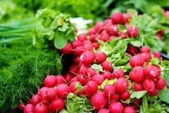 Groupes de radis vendus sur le marché de l'agriculteur Photo stock