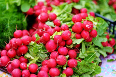 Groupes de radis vendus sur le marché de l'agriculteur Images libres de droits