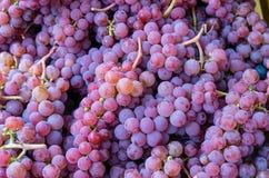 Groupes de raisin rouge au marché Image libre de droits
