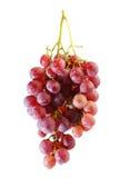 Groupes de raisin rouge frais d'été photo libre de droits