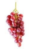 Groupes de raisin rouge frais d'été photographie stock
