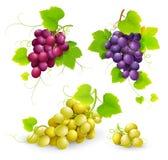 Groupes de raisins Image stock