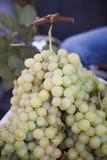 Groupes de raisins image libre de droits