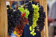 Groupes de raisins de différentes variétés au soleil photo libre de droits