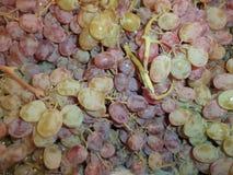 Groupes de raisins frais mûrs photos libres de droits