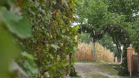 Groupes de raisins rouges accrochant dans le vignoble Rangées des raisins de pinot noir prêts à être sélectionné dans le vignoble clips vidéos
