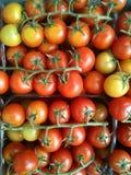 Groupes de tomates-cerises Image stock