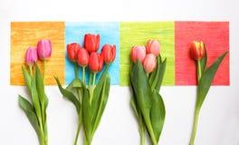 Groupes de tulipes sur les grands dos colorés Photo stock