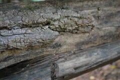 Groupes en bois Images libres de droits