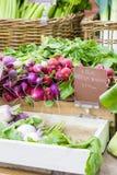 Groupes frais de radis sur le marché local d'agriculteurs Images libres de droits