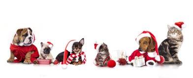 Groupez le chiot de Noël un chat de d dedans sur le fond blanc Photographie stock libre de droits