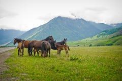 Groupez les chevaux sur des prés entre les montagnes Image libre de droits