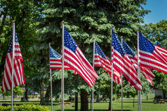 Grouping of American flags waving in park on Memorial Day Stock Image