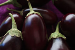 Grouping of eggplants Royalty Free Stock Photography
