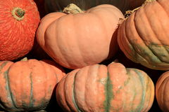 Grouping of large colorful pumpkins at local market. Colorful image in grouping of large pumpkins at local market Royalty Free Stock Photos