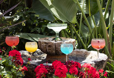 Grouping of Margarita glasses and drink Royalty Free Stock Image