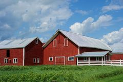 Complex of Red Barns of Vermont Farm. A grouping of red barn buildings with white trim on an old dairy farm in Vermont New England. Some are used for the cows Stock Photo