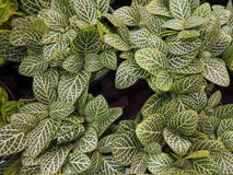 4 groups of beautiful leaves. Stock Image