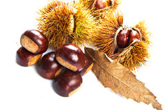 Groups of chestnut nuts on white close up Stock Photos
