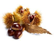Groups of chestnut nuts on white close up Royalty Free Stock Image