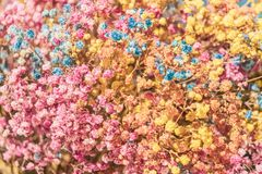 Groups of colourful Gypsophila on wall.  royalty free stock images
