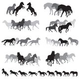 Groups of isolated horses silhouettes-3. Group of black and grey isolated silhouettes of horses Norwegian fjord pony standing, walking, running isolated on white Royalty Free Stock Images