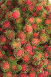 Groups of rambutan Royalty Free Stock Photo
