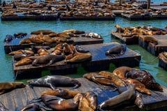 Sea lions at Pier 39 in San Francisco stock photos