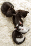 Groups of young kittens sleeping Stock Photo