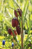 Grouse avec le bokeh et baisses, fleurs tôt abstraites sur le fond de bokeh au lever de soleil photo libre de droits