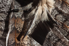 Grouse claws and feathers. Claws and feathers of ruffed grouse close-up Royalty Free Stock Photo