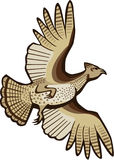 Grouse Flying. Illustration of a grouse in flight, viewed from below Royalty Free Stock Photo