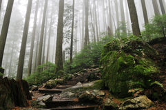 Grouse Grind Hiking Trails stock photo