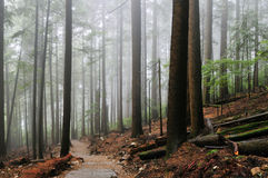 Grouse Grind Hiking Trails Royalty Free Stock Images