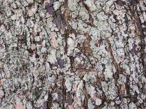 Grov gammal textur för foto för closeup för trädskäll Lantlig closeup för trädstam arkivbilder