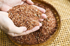 Grov rice Arkivbild