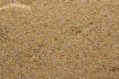 grov sand Royaltyfria Bilder