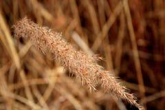 Grov spik av lösa gräs Fotografering för Bildbyråer