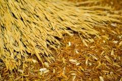 Grov spik- och kornavkastning utan kemikalieer. Royaltyfria Bilder