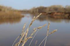 Grova spikar på bakgrunden av floden Arkivfoton
