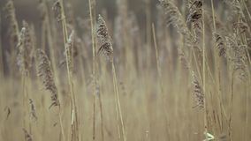 Grova spikar som fladdrar i vind stock video