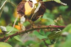Grova spikar taggar, gräsplansidor Arkivfoton