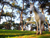 Grove with alone horse Stock Photos