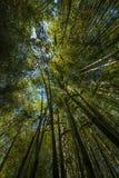 grove bambusowego wysoki jpg rezolucji Zdjęcie Royalty Free